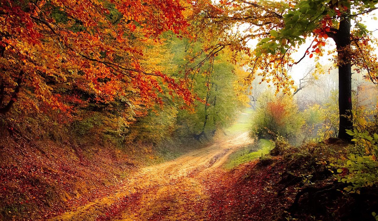 Herbstwetter. Nass und windig.