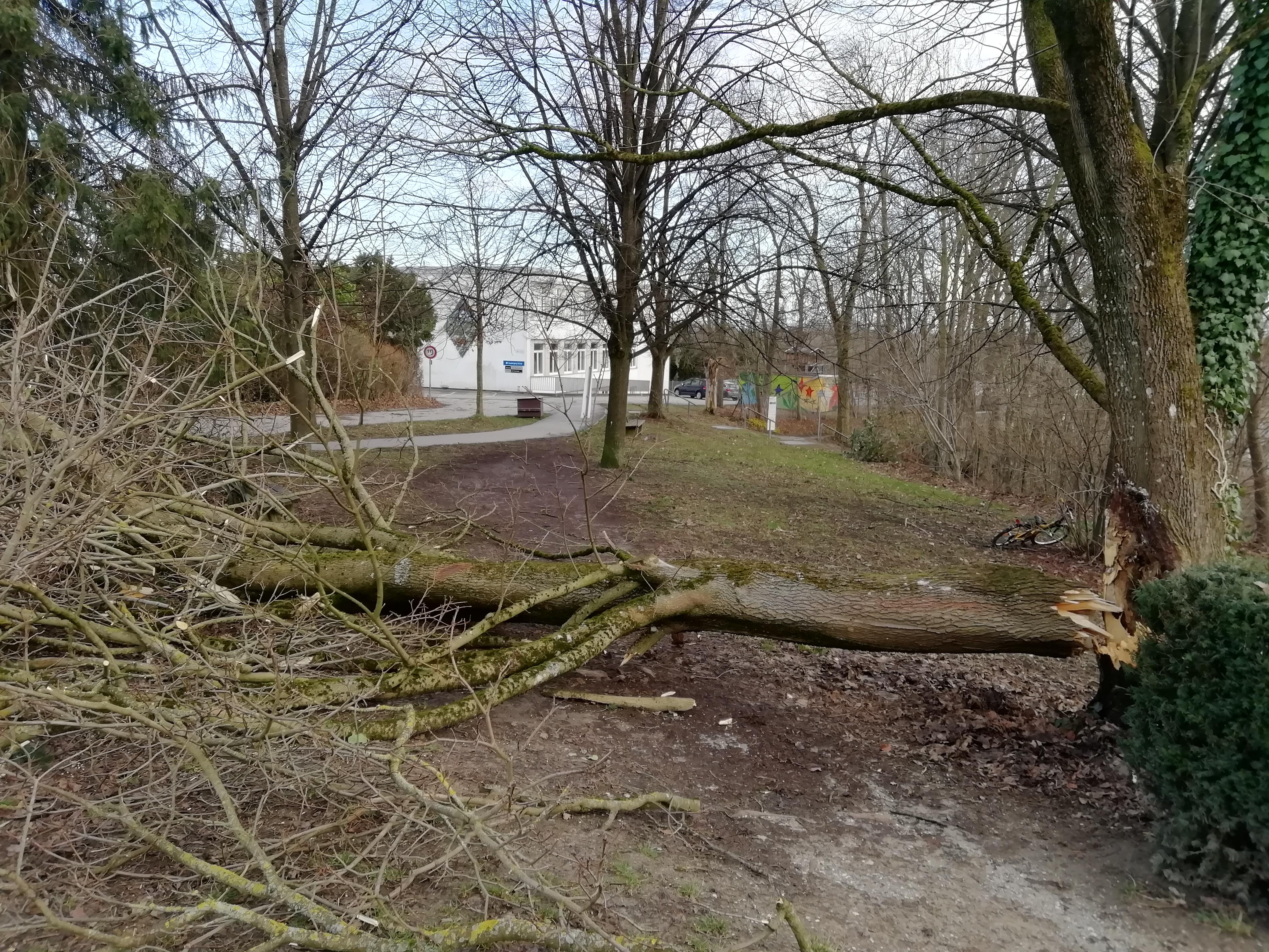 Sturm im Februar. Orkantief Sabine sorgte für Chaos.