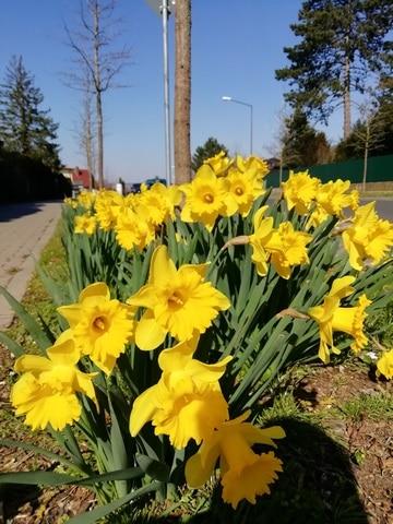 Ostwetterlage im März sorgt für tiefblauen Himmel