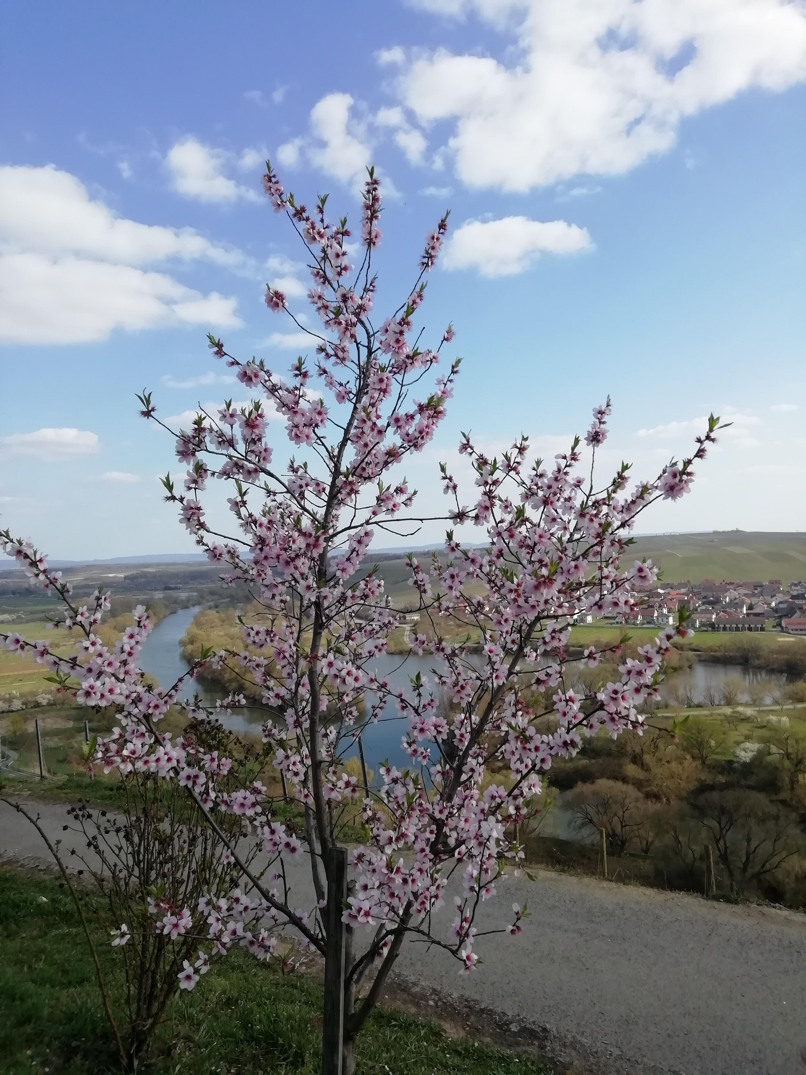 Frühling 2021 - kalt und trocken